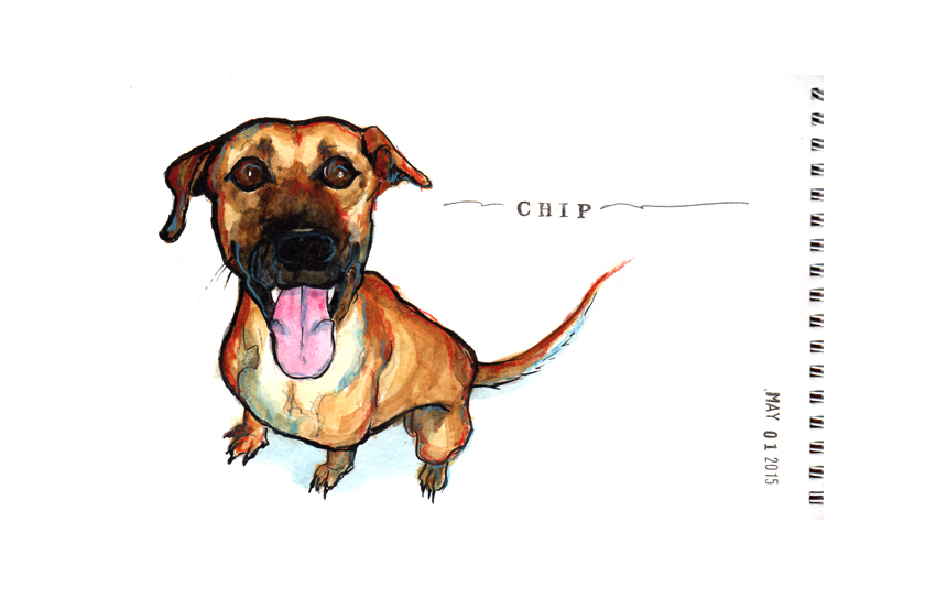 Chip is up for adoption and very eager